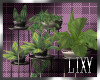 {LIX} House Plants 5