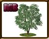 [9V2] Big Tree