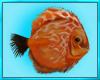 Scuba Fish Dive