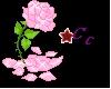 Glowing pink Rose