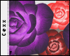 A |Purple R+P Head Roses