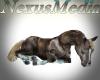 Animated laying horse