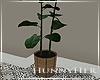 H. Plant