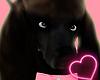 Poddle Dog [Browny] ♦