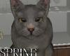 Grey Cat Vacuum / Bark
