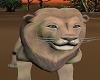 FG~ African Lion