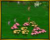 Primrose Fairy's