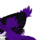 Violet Sugarglider Ears