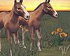 Sundown Horses