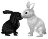 Bunnies in L♥ve