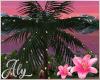 Pink Sky Palm