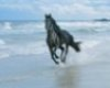Black horse on beach pic