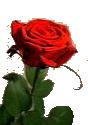 sticker_10126828_40475721